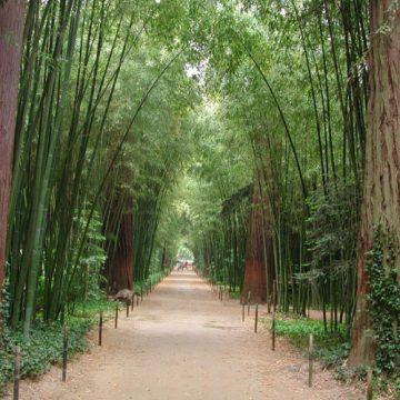 La Bambouseraie, un voyage exotique en Cévennes