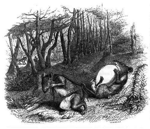 Les animaux pensent-ils ? Deux conceptions philosophiques, La Fontaine-Descartes