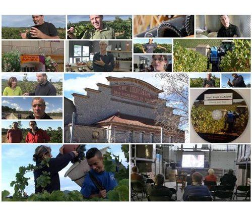 L'avenir des coopératives viticoles : un documentaire