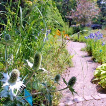 Les paradoxes de la botanique aujourd'hui