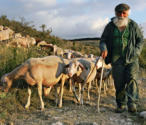 Avec les bergers, veillée de Noël